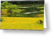 Susans Gold Pond Greeting Card