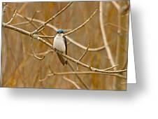 Swallow Greeting Card