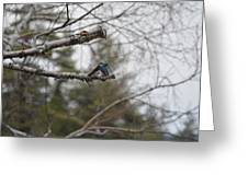 Swallow Discussion Greeting Card