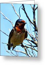Swallow Glance Greeting Card