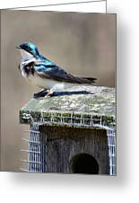 Swallow In The Wind Greeting Card