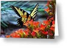 Swallow Tail Butterfly Posing Greeting Card