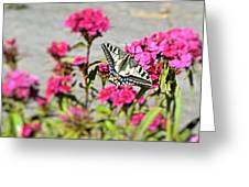 Swallow Tail Greeting Card by Dave Woodbridge
