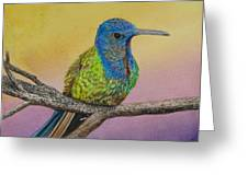 Swallow-tailed Hummingbird Greeting Card