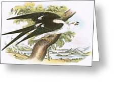Swallow-tailed Kite Greeting Card