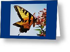 Swallowback Butterfly # 2 Greeting Card