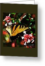 Swallowback Butterfly # 1 Greeting Card