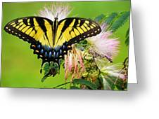 Swallowtail And Mimosa Greeting Card