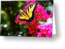 Swallowtail Beauty  Greeting Card