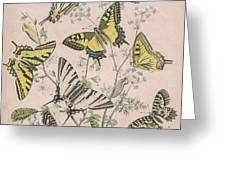 Swallowtail Butterflies - Papilionidae Greeting Card