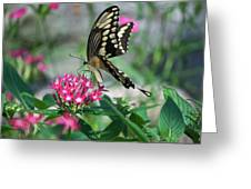 Swallowtail Butterfly 01 Greeting Card