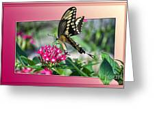 Swallowtail Butterfly 02 Greeting Card