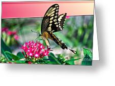 Swallowtail Butterfly 04 Greeting Card