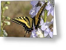 Swallowtail Butterfly 1 Greeting Card