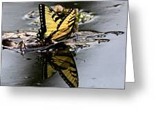 Swallowtail - Butterfly - Reflections Greeting Card