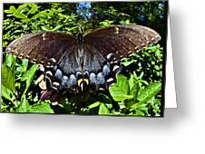 Swallowtail Butterfly Greeting Card by Susan Leggett