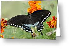 Swallowtail Butterfly With Marigolds Greeting Card