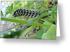 Swallowtail Caterpillar Greeting Card