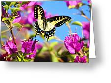 Swallowtail In Flight Greeting Card