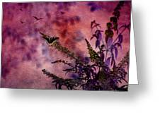 Swallowtail In The Butterfly Bush - Featured In The Wildlife And Comfortable Art And Newbies Groups Greeting Card