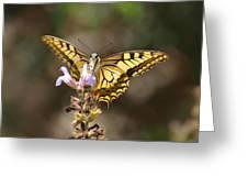 Swallowtail Greeting Card