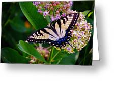 Swallowtail Greeting Card