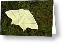Swallowtail Moth Greeting Card
