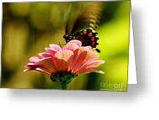 Swallowtail Motion Greeting Card