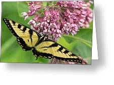 Swallowtail Notecard Greeting Card