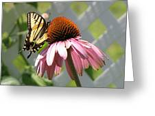 Looking Up At Swallowtail On Coneflower Greeting Card