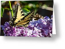 Swallowtail On Lilac Greeting Card