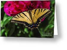 Swallowtail On Peony Greeting Card