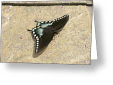 Swallowtail On The Rocks Greeting Card