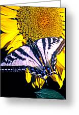 Swallowtail Sunflower Greeting Card