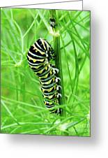 Swallowtail To Be Greeting Card