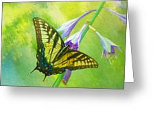 Swallowtail Visits Hosta Flowers Greeting Card