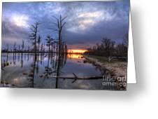 Swamp At Dusk Greeting Card