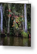 Swamp Beauty Greeting Card