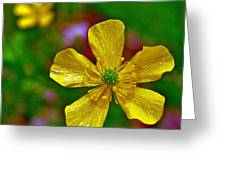 Swamp Buttercup Near Loon Lake In Sleeping Bear Dunes National Lakeshore-michigan  Greeting Card