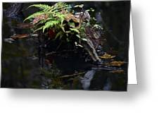 Swamp Fern Greeting Card