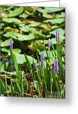 Swamp Flowers  Greeting Card
