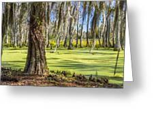 Swamp In Magnolia Plantation And Gardens Charleston Sc Greeting Card