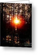 Swamp Light Greeting Card