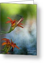 The Wood Lily And Dragon Fly Greeting Card