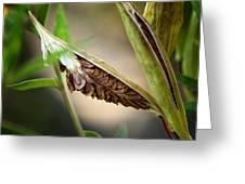 Swamp Milkweed Pod Greeting Card
