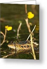 Swamp Muscian Greeting Card