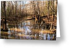Swamp Reflections Greeting Card