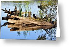 Swamp Scene Greeting Card by Al Powell Photography USA
