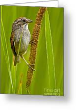 Swamp Sparrow Pictures Greeting Card