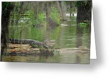 Swampland Greeting Card